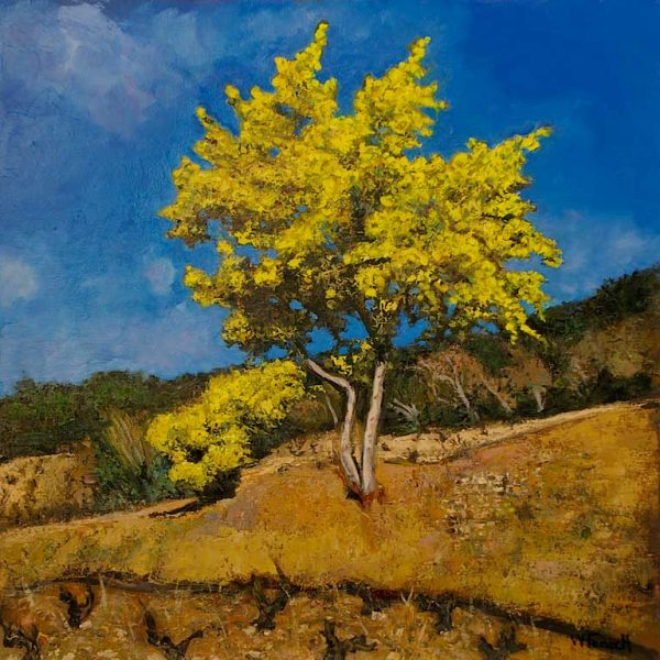 Le Mimosa HST 80x80 - William Fenech